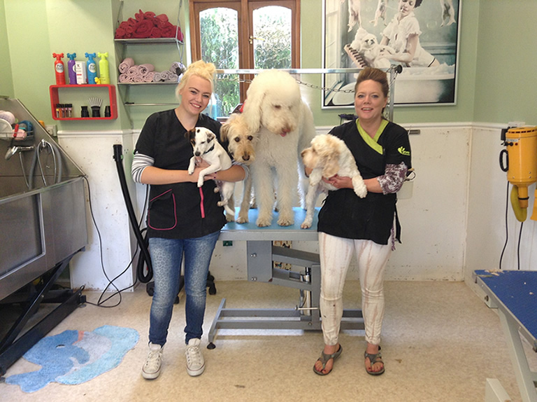 Dog Grooming Services Dover Deal Dog House Grooming Salon